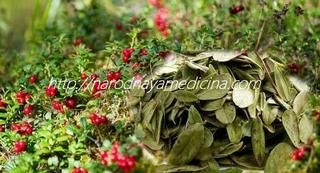 брусничный лист применение