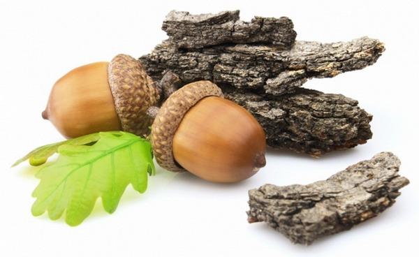 кора дуба полезные свойства