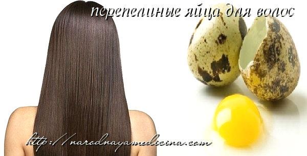 аски из перепелиных яиц для волос
