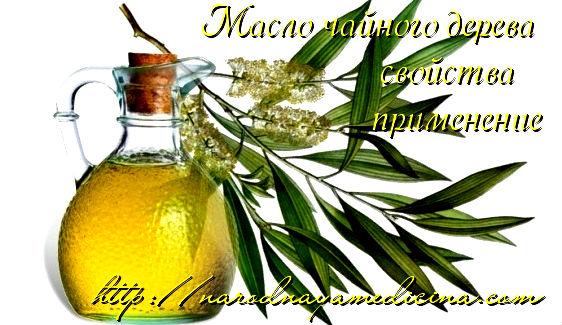 эфирное масло чайного дерева свойства