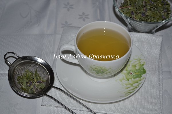 Трава иван чай лечебные свойства