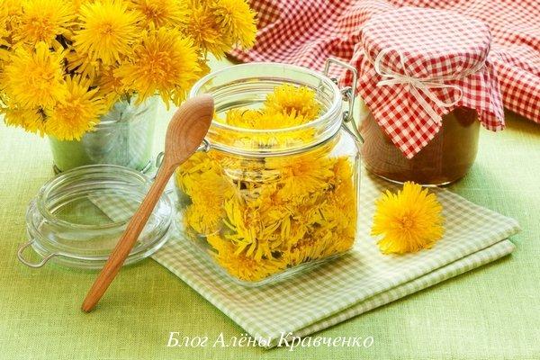 Цветы одуванчика лечебные свойства