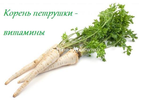 корень петрушки витамины