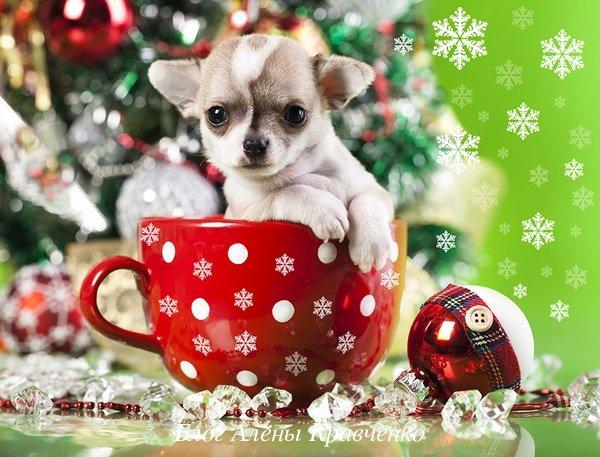 Новогодние стихи на год Собаки