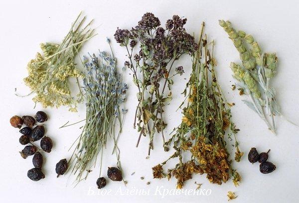 Желчегонные травы