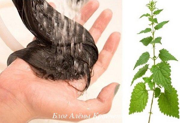 Травы для роста волос