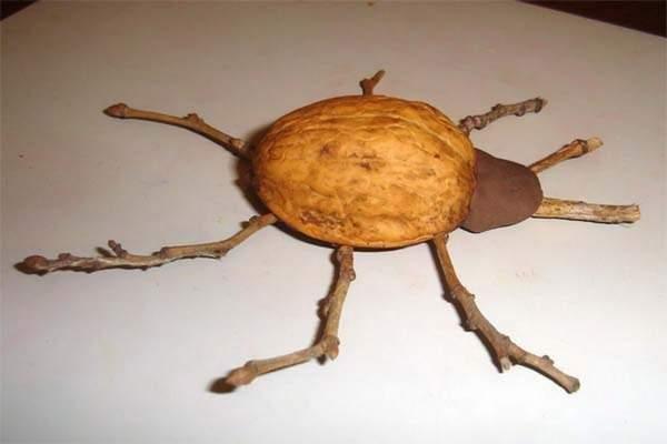 Поделки из грецкого ореха божья паук