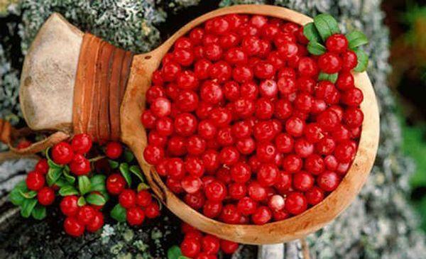 ягоды клюквы полезные свойства и противопоказания