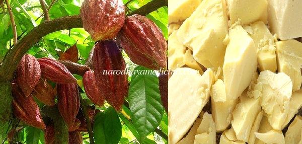 масло какао лечебные свойства