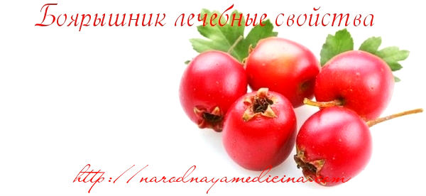 боярышник плоды полезные свойства