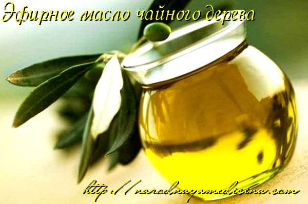 Эфирное масло чайного дерева. Свойства. Применение. Лечение. Мой отзыв.
