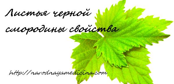 листья черной смородины