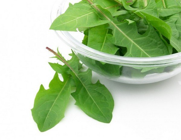 Листья одуванчиков лечебные свойства