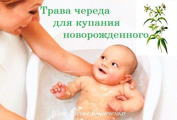 Трава череда для купания новорожденного