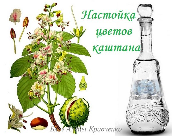 Цветы каштана на водке