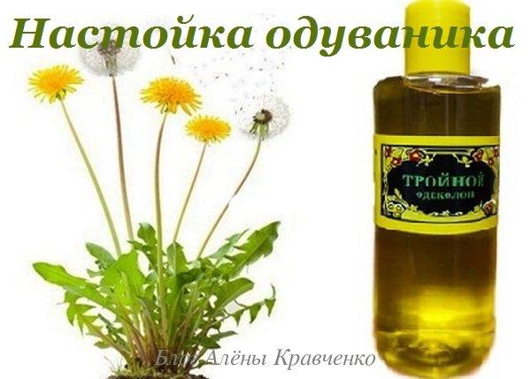 Настойка из цветков одуванчика на водке, на спирту, на тройном одеколоне