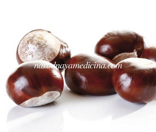 При каких заболеваниях применяют конский каштан. Самые основные полезные свойства плодов