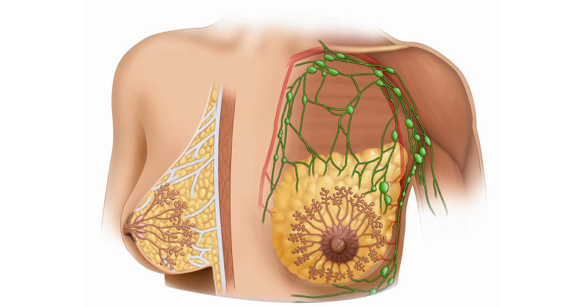 Анатомическое изображение грудной железы